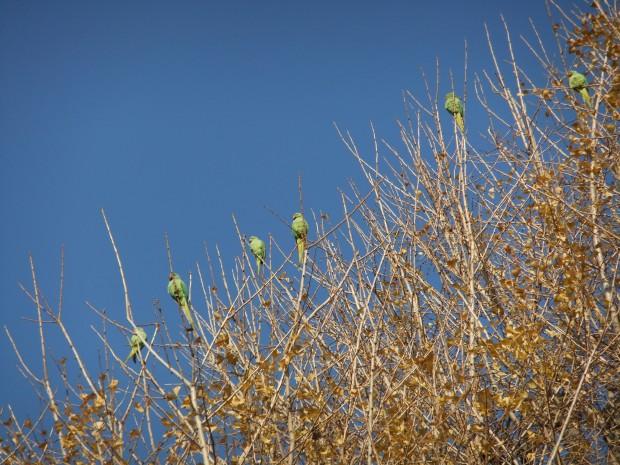 木に留まっている緑の鳥