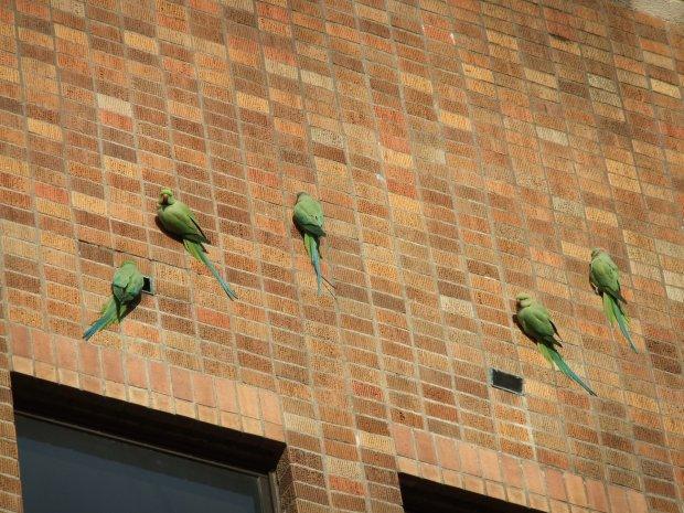 校舎の壁に留まる緑の鳥